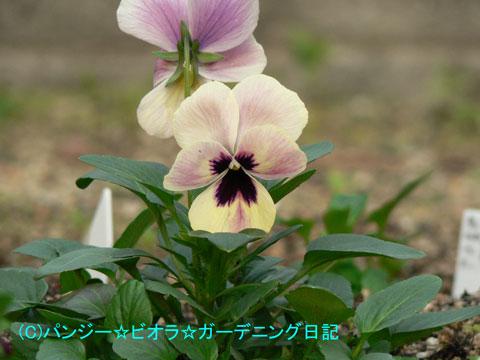051124irokawari1.jpg