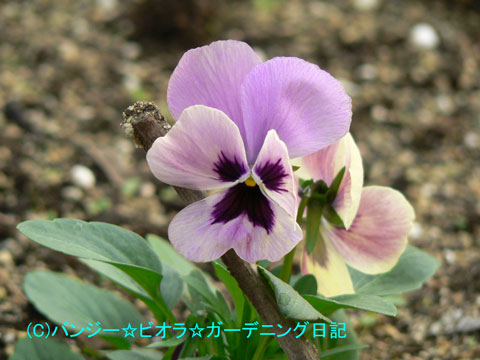 051124irokawari2.jpg