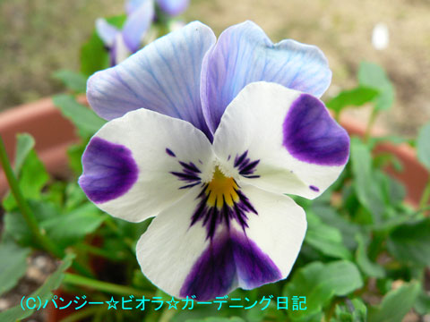 051124mimoto3.jpg