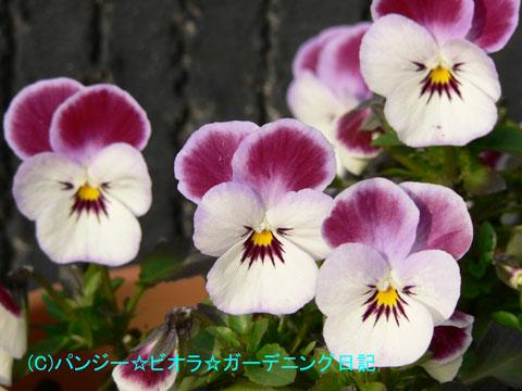 060227mimoto2.jpg