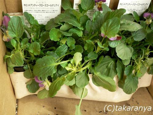 061025sakamoto4.jpg