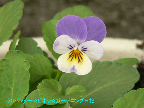 061118nanashi.jpg