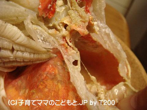 081224zuwai4.jpg