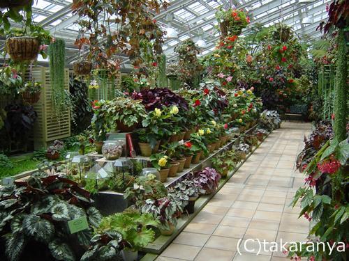 美しい室内ガーデン