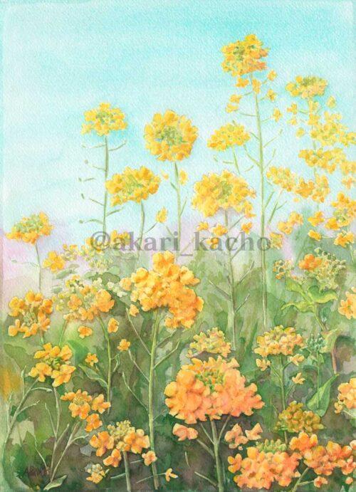 あかり花鳥風月画「菜の花の散歩道」